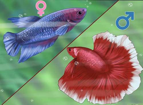 fish that can change gender