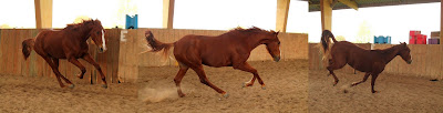 Théorie des humeurs selon la couleur du cheval.