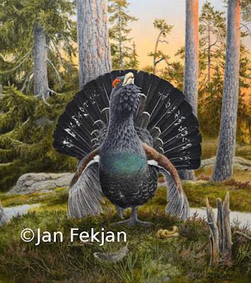 Bilde av oljemaleriet 'Trolltiur'. Maleri av storfugl hann (Tetrao urogallus). Hovedmotivet er en tiur i spill, med hevet hode og blikkontakt med betrakteren. Halen står som en vifte bak hodet. Tiuren står i et åpent skogslandskap med bartrær i bakgrunnen. Bildet er kvadratisk.