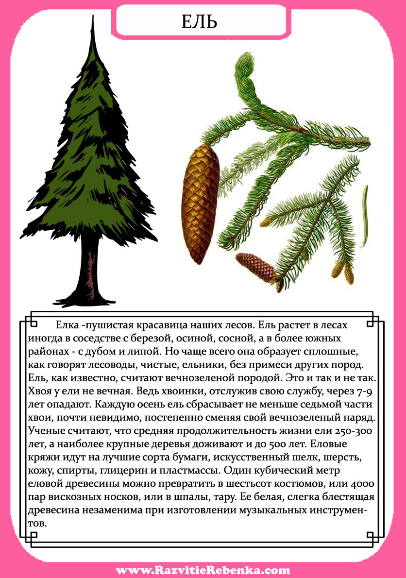 знакомство ребенка с деревьями