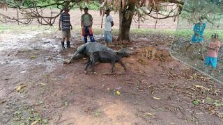 Raio mata dois cavalos na zona rural de São Gonçalo do Amarante RN