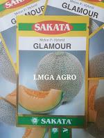 tanaman melon, cara menanam melon, buah melon, lmga agro