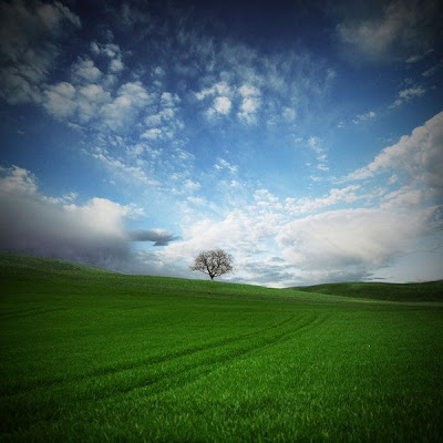 Paisaje con un árbol solitario.