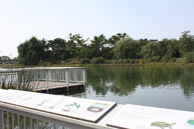 Take a closer view of aquatic wildlife at Chicago Botanic Garden.