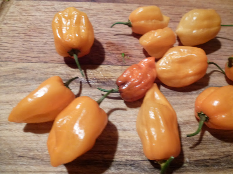 Lori's Garden: Peppers and the Scoville Scale