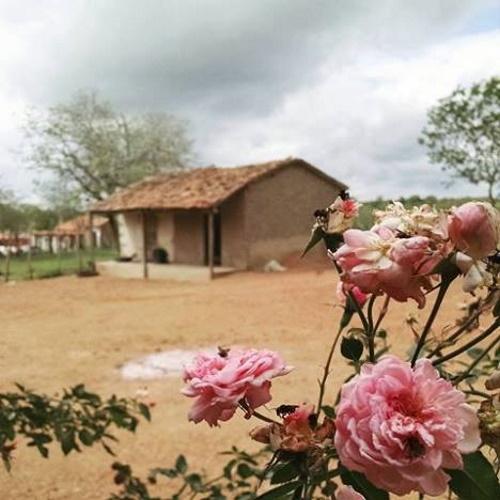 Paisagem sertaneja, com uma casinha simples de alvenaria, cercada de um solo seco,pouco verde, com uma roseira florida em sua frente.