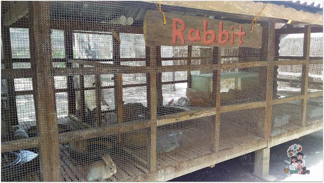 Rabbits at The Fun Farm at Sta. Elena