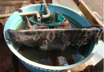 Cria o de peixes em tanques piscicultura online como for Tanques para cria de tilapia