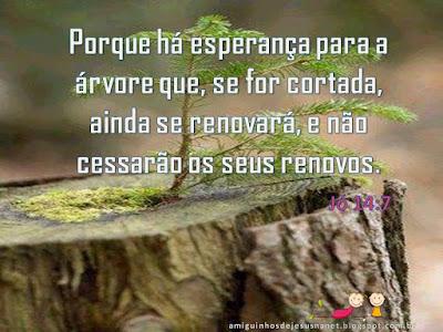Versículo - Jó 14:7