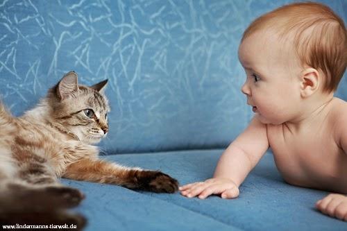 Magnifique Photo chat avec Bébé
