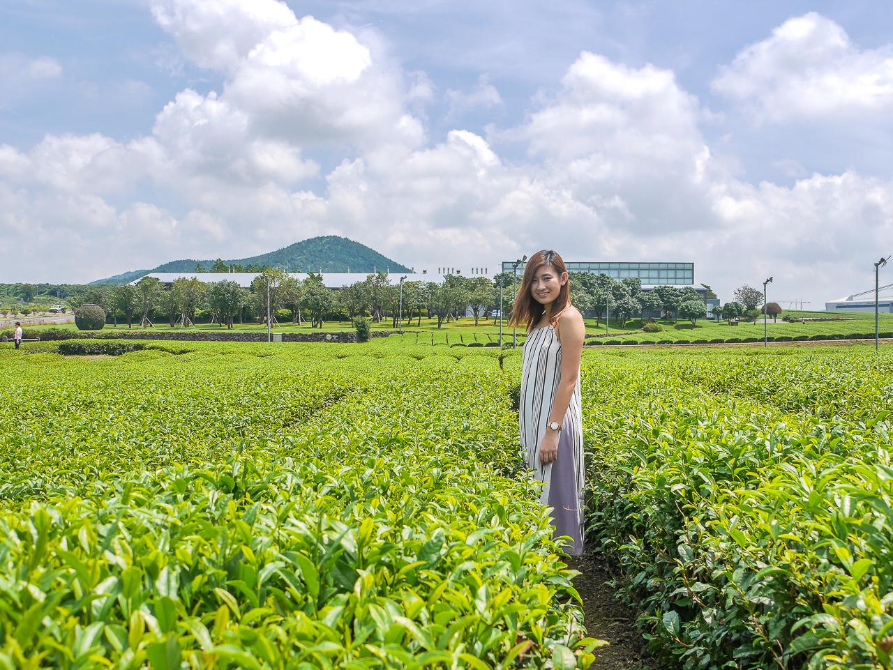 O'sulloc green tea jeju korea