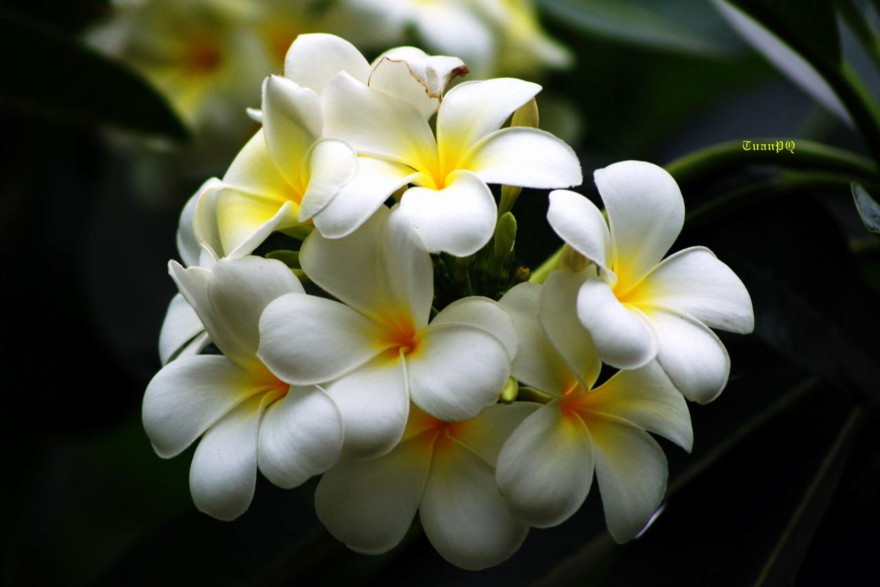 Những loại hoa không nên cắm trên bàn thờ