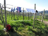 sušenje robe vinograd camino de Santiago Norte Sjeverni put slike psihoputologija