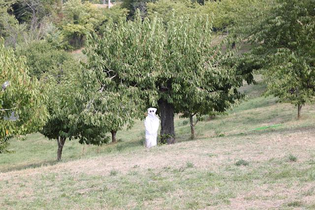 Bologna, Valsamoggia - Viinitarhoja ja koirahommia 13