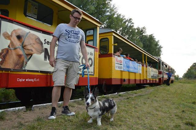ciuchcia, podróże z psem, z psem w podróży, podróżowanie z psem, biba, nad morze, pies nad morzem, nad morzem z psem