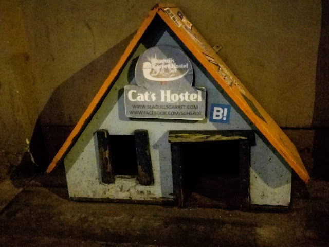 cat; hostel; ryga; riga; Łotwa; latvia