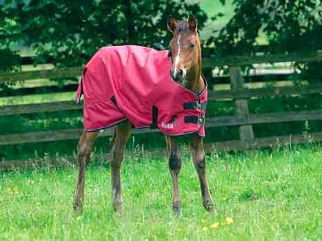 fe16e321f1d8c Z życia koni: Wszystko o derkach dla koni