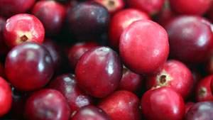 Buah cranberry efektif mengatasi sering kencing