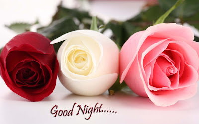 good-night-with-White-Red-Rose