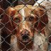 Abate de Animais em Canis Passou a Ser Proibido