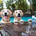 Balto Pet - Lactogold Probiotics