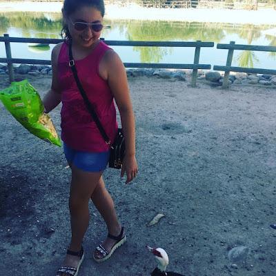 UA, Universidad de Alicante, patos, tortugas,