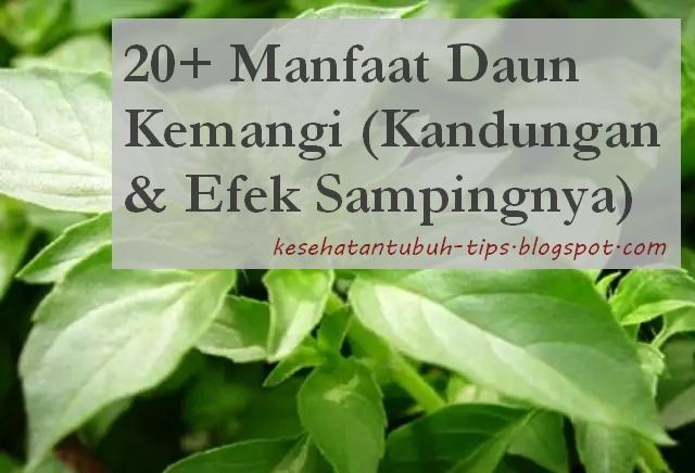 20+ Manfaat Daun Kemangi (Kandungan & Efek Sampingnya)