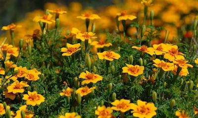 как-вырастить-цветы-из-семян
