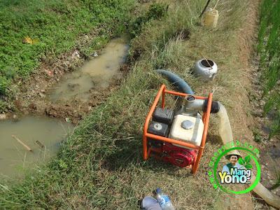 FOTO 3 :  Melakukan Pompanisasi untuk penyiraman   tanaman Padi TRISAKTI umur 39 HST.