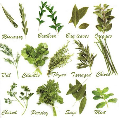 herba masakan barat
