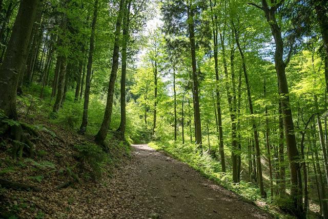 Von Hof bei Salzburg auf den Filbling  Wandern in der FuschlseeRegion 07