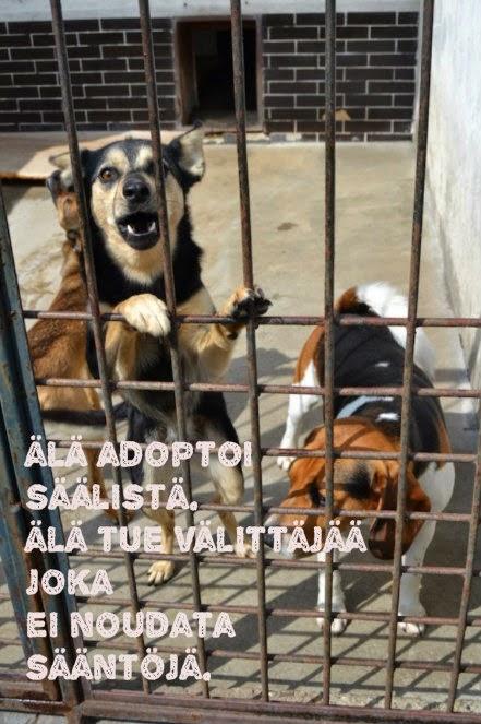 koiran tuonti suomeen venäjältä