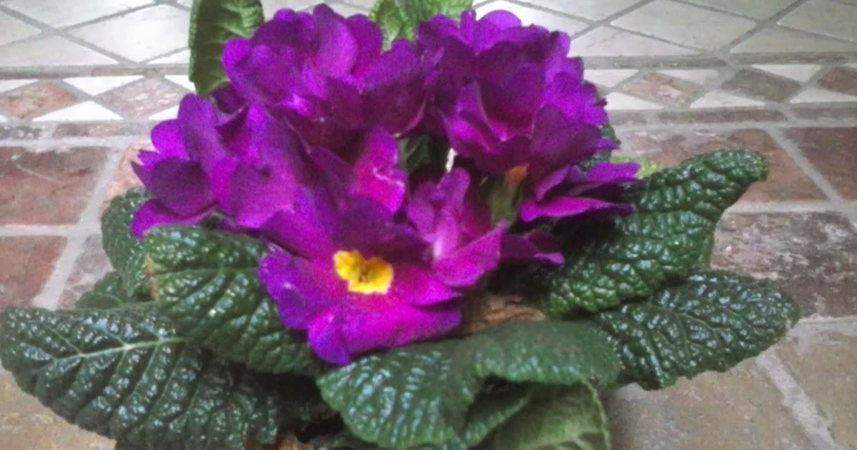 Entre patios y plantas flores para primavera y verano for Modelos de jardineras para patios