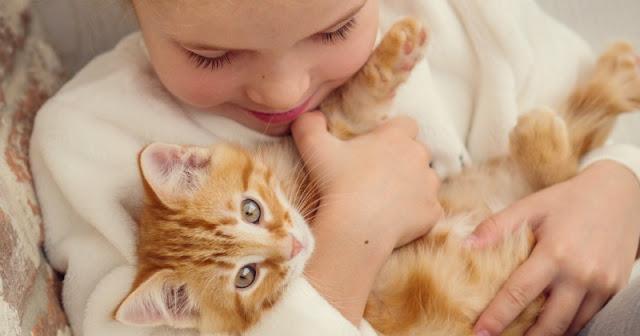 Cara buat kucing makin manja