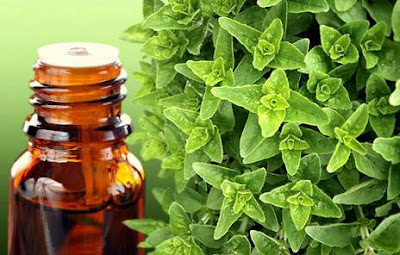 Natural Antibiotics and also the Amazing Essential oil of Oregano