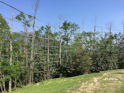 Views of a roccolo in Monte del Roccolo. Note some artificial trees mixed with living trees.