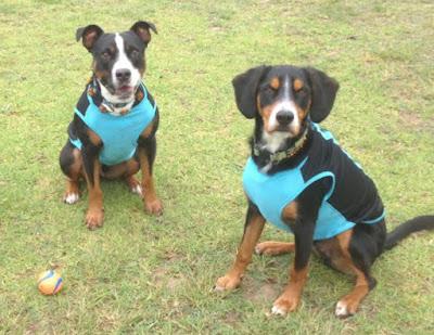 Dogz-body-protector-WildDogz-Australia