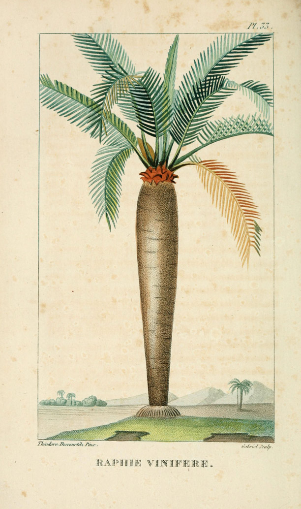 Great Free Download Botanical Palm Tree Prints