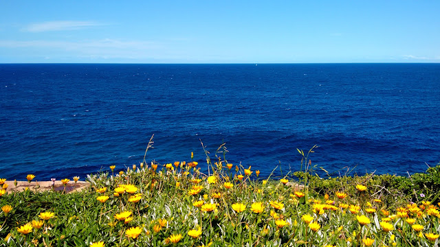 beautiful Sydney beaches - blue ocean - wildflowers