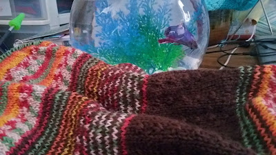 Adventures of a Beta fish and hand knitting a cowl for sale at https://www.etsy.com/shop/JeannieGrayKnits?ref=hdr_shop_menu