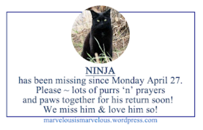 Ninja, Please Come Home