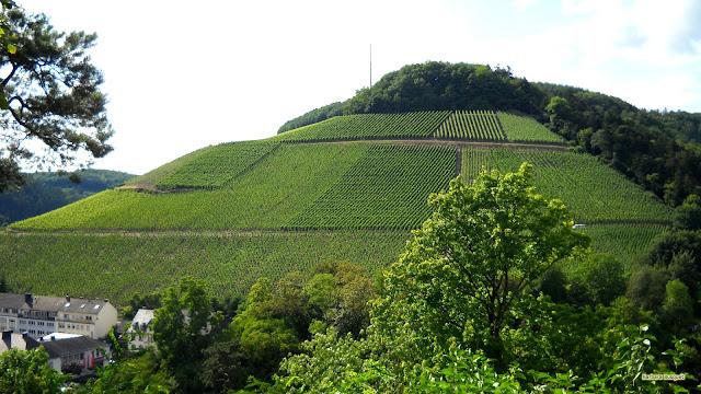 Groene wijnvelden op een heuvel