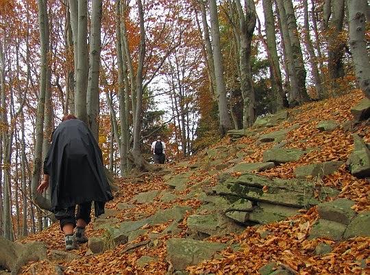 Spod leżących liści wystają kamienie i skały fliszu karpackiego.