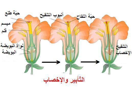 التكاثر الزهري