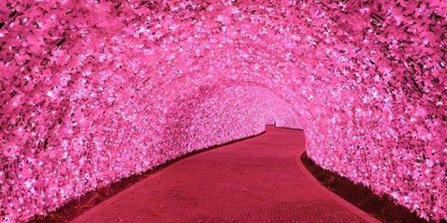 http://2.bp.blogspot.com/-me_enX5NSUw/Vc0ZfDIG24I/AAAAAAAAAfs/J-kxYq8GIf4/s1600/terowongan-sakura-di-taman-nabana-no-sato-nagashima-rev1.jpg