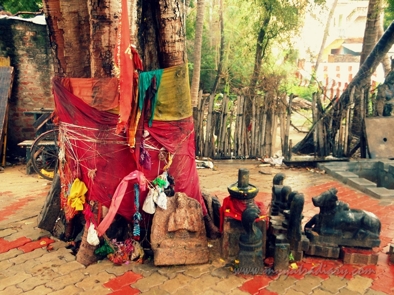A sacred tree at Rama Teertham, Rameshwaram