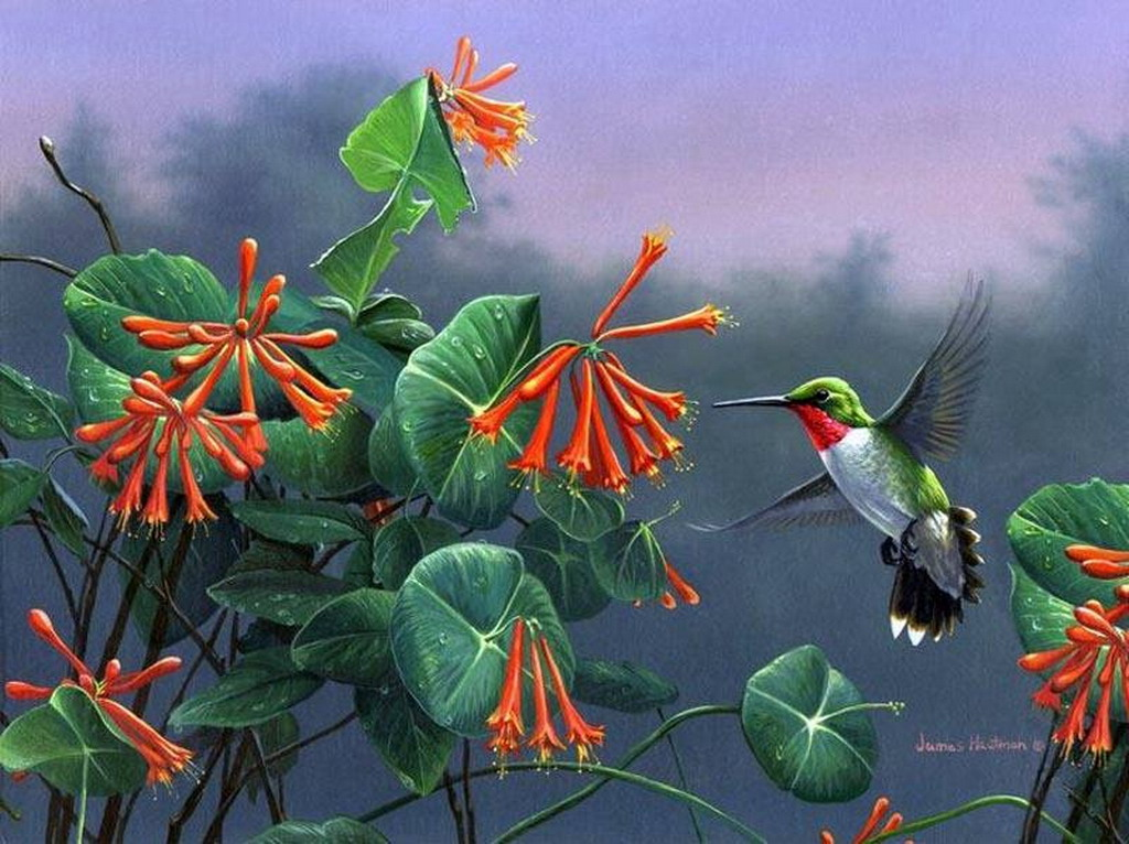 bird of paradise animal wallpaper