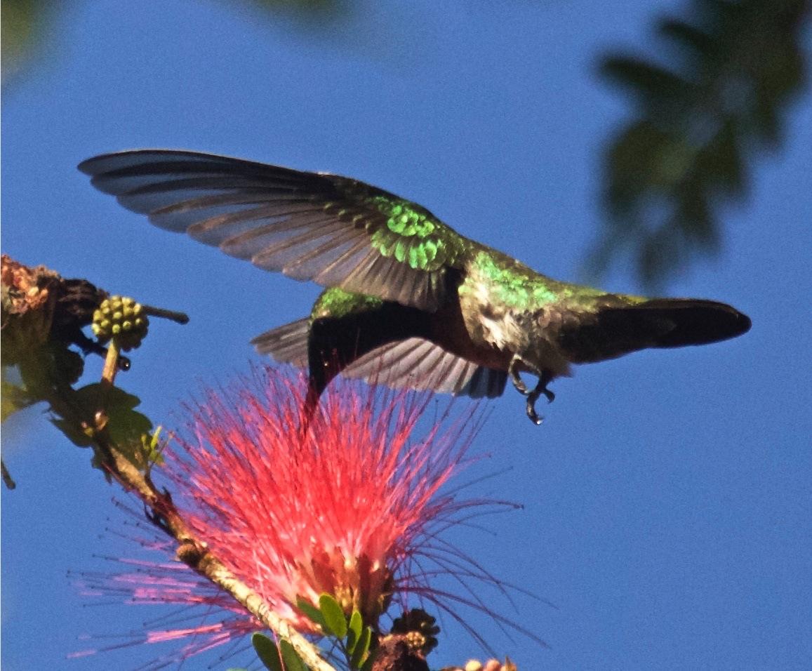 Birds And Wildlife Of Rincon Puerto Rico