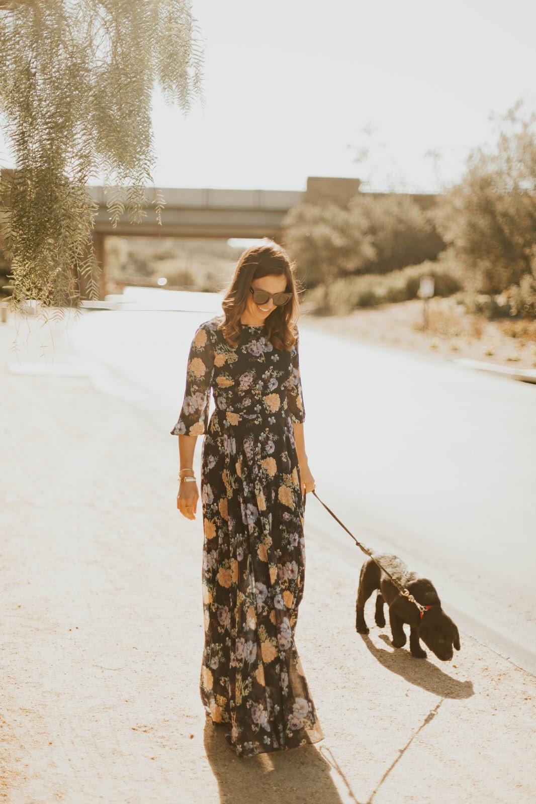 black puppy photoshoot