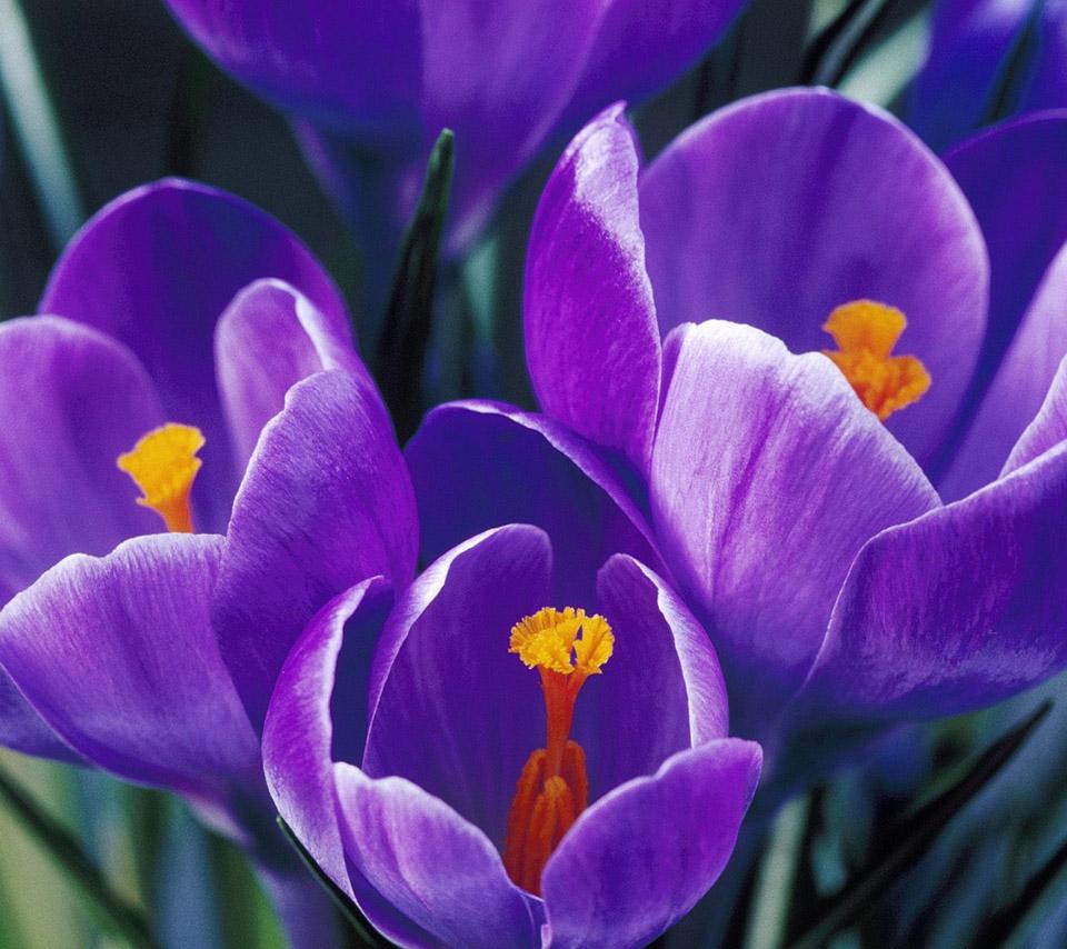 Flowers For Flower Lovers.: Beautiful Flowers HD Wallpapers